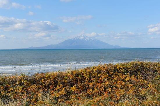 ハマナスの紅葉と利尻富士