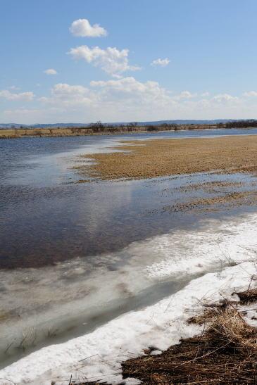 サロベツ川の氾濫