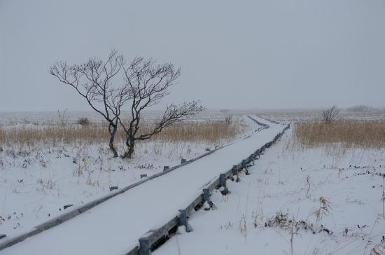 雪降る湿原