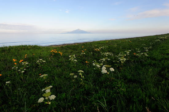 花咲く稚咲内海岸