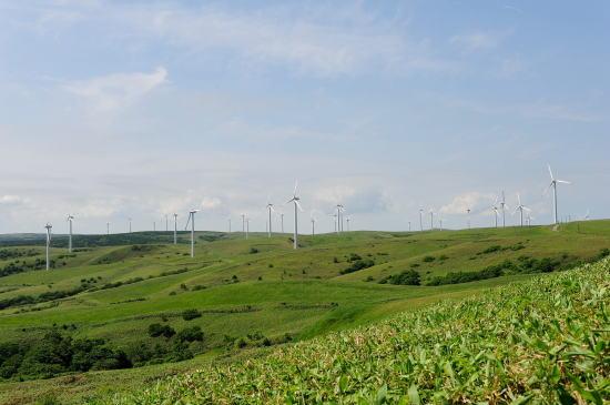 林立する発電風車
