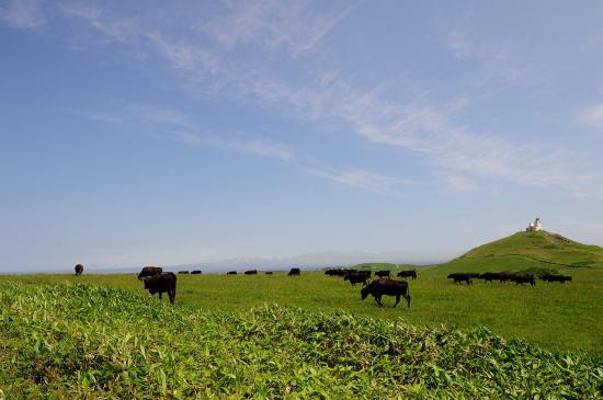 黒牛(肉牛)の牧場