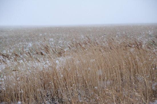 吹雪の湿原