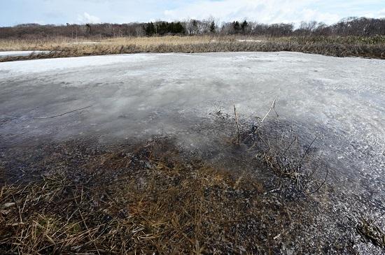 湿原の氷融ける