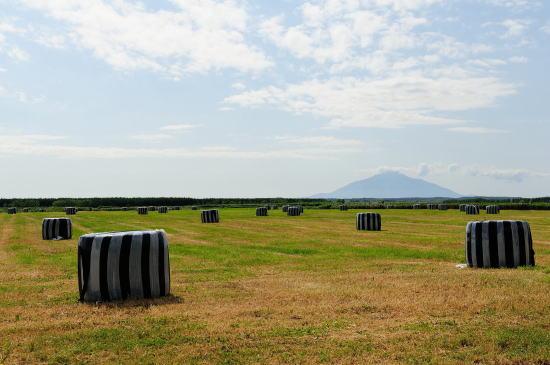 牧草ロールと利尻富士