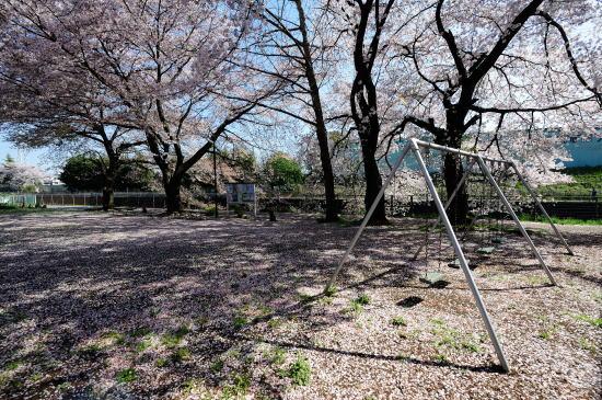 桜に埋まる公園