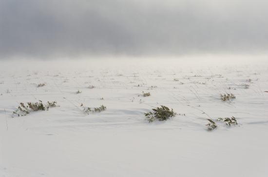 地吹雪に耐える
