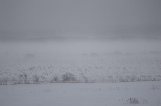 サロベツ湿原、吹雪の日