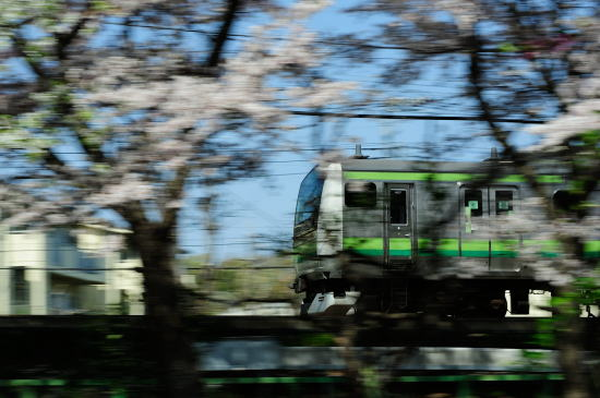JR横浜線~桜