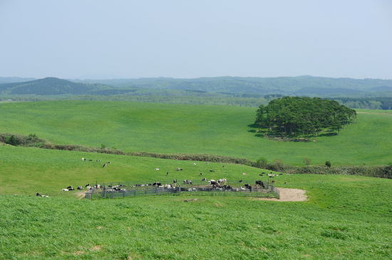 大規模草地牧場