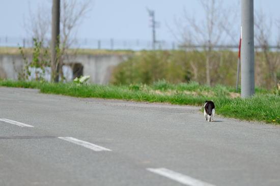猫のお散歩