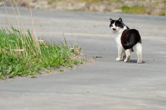 猫のお散歩(=^・^=)