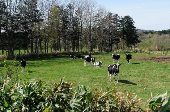 放牧したての牛