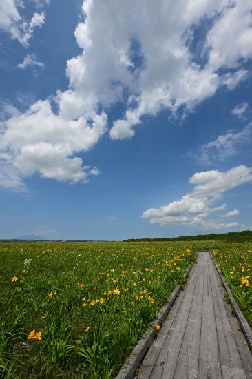 花と夏空の木道