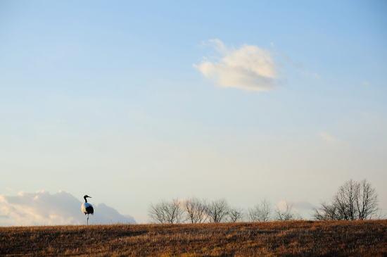 ひとり想う丘