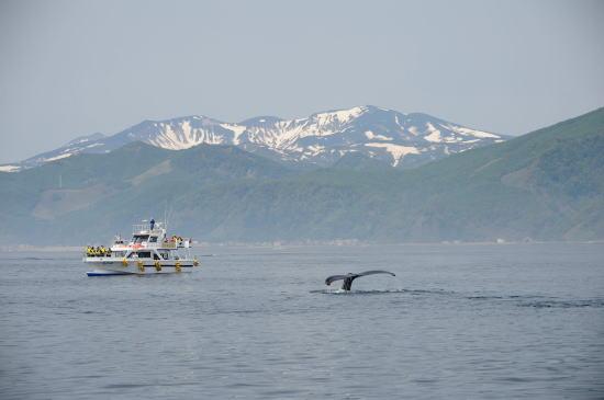 クルーズ船とザトウクジラ
