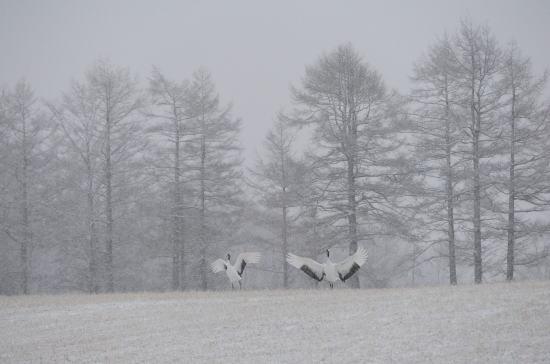 雪の日のランディング