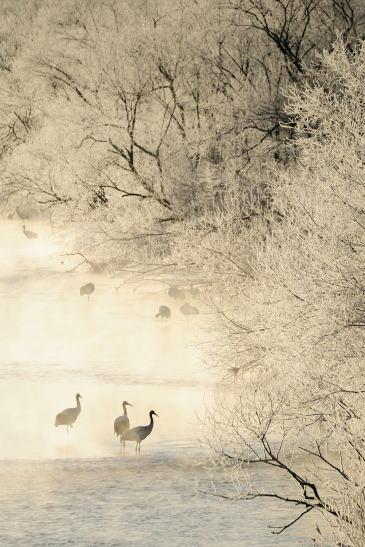 霧氷に佇む
