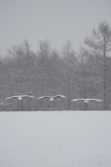 雪の日のファミリー