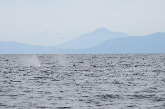 国後島と5頭のマッコウクジラ