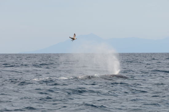 カモメさんとクジラさん
