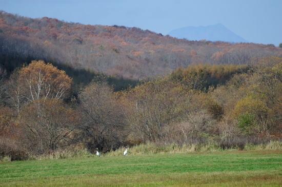 紅葉の牧草地