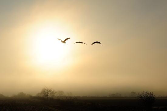 朝靄のシルエット