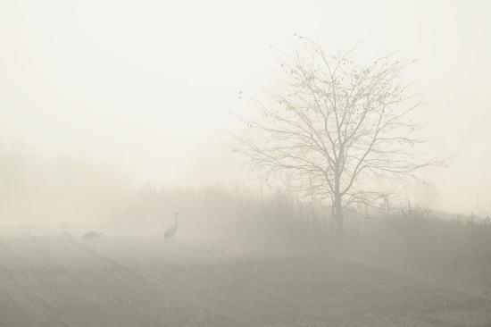 朝靄のカップル