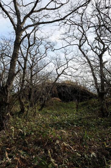 林の中の掩体壕