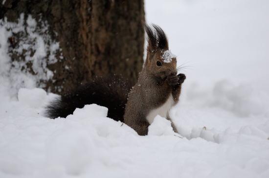 今日は雪が降って寒いね。