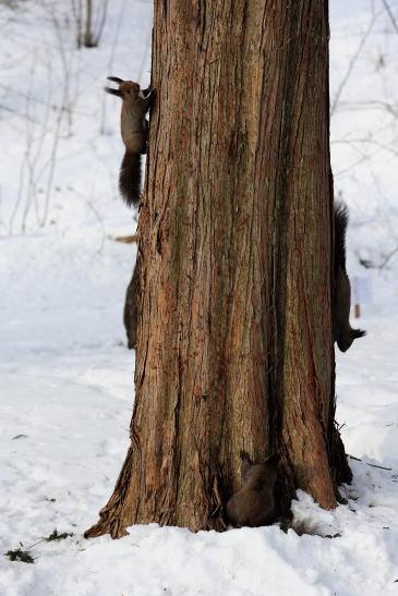木の幹を四匹で走り回っています。