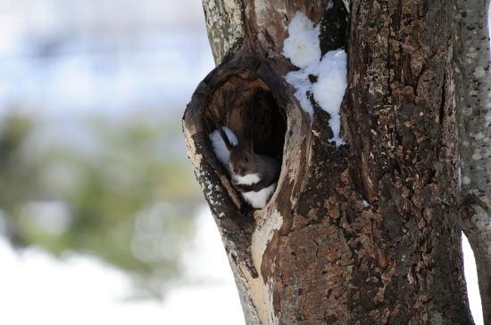 樹洞の中で、ボリボリ