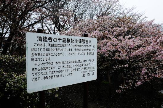 清隆寺の千島桜解説板