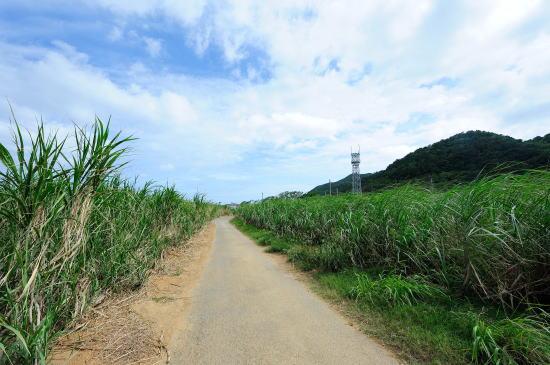 サトウキビ畑の道
