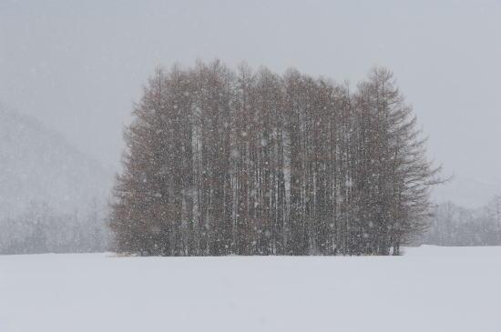 雪を映す木(カラマツ)
