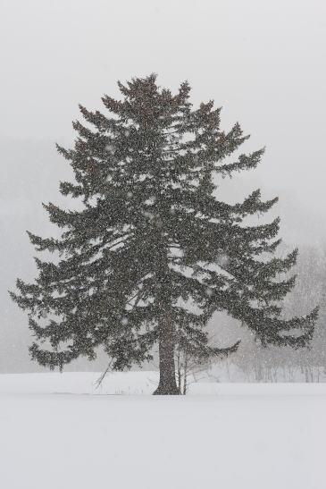 雪を映す木