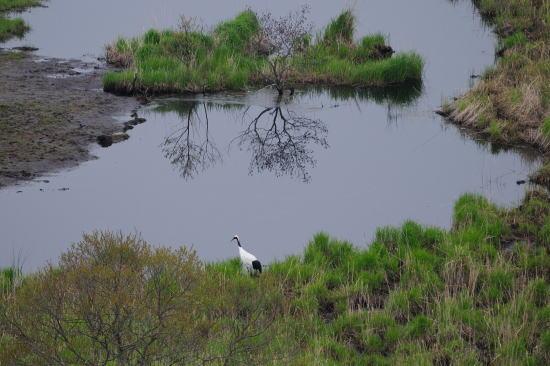 湿原の畔で