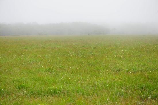 落石岬湿原