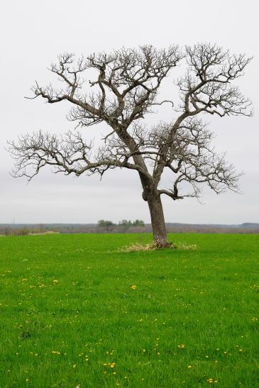 通称 盆栽の木