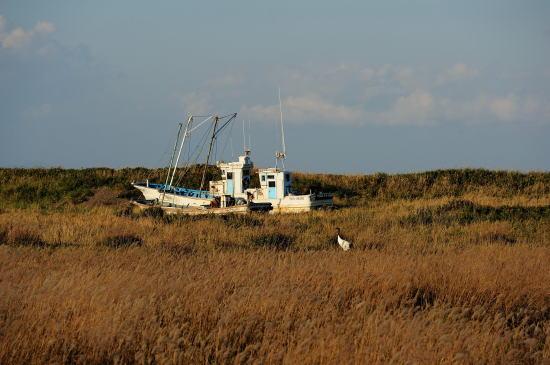 船とタンチョウ