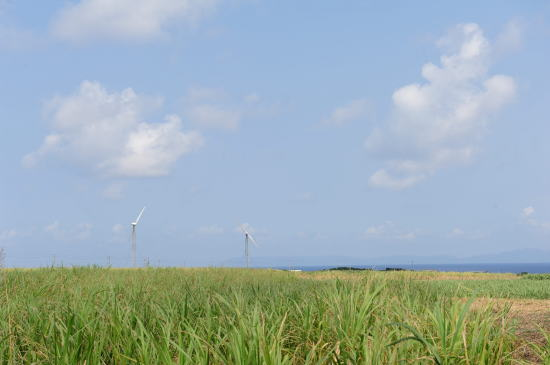 さとうきび畑と発電風車