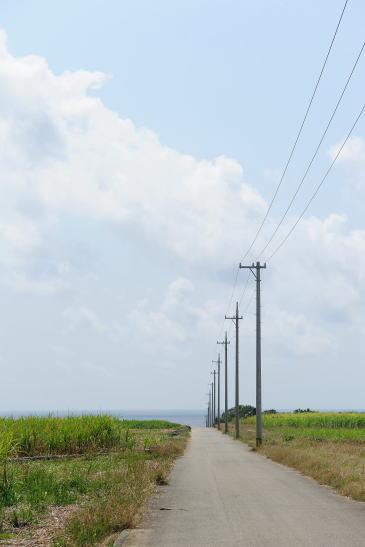 電柱とさとうきび畑