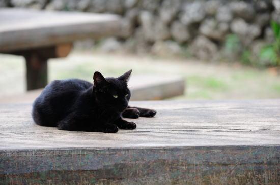 猫(=^・^=)