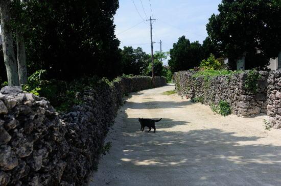 竹富の町並み