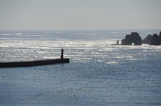 落石漁港を見下ろす