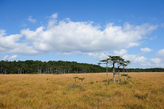 秋色の落石岬湿原