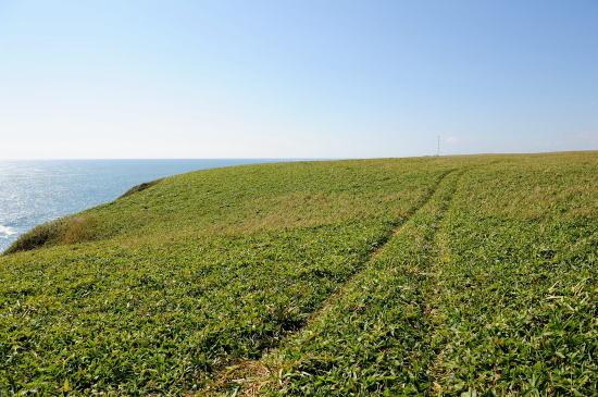 断崖の上の気持ち良い草原を歩きます。