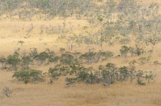 湿原の屏風絵