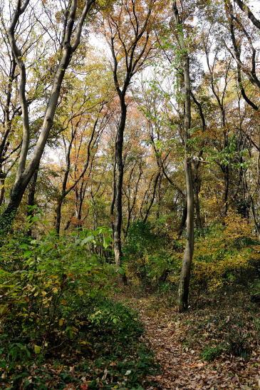 木もれびの森をゆく