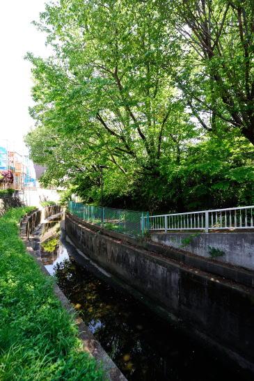 新緑の深堀川